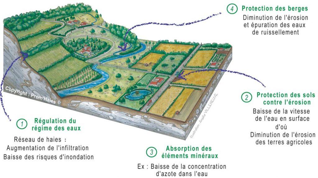 schéma cycle de l'eau ©prom'haies